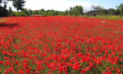 8 reasons to take a French immersion course in Provence during the Spring